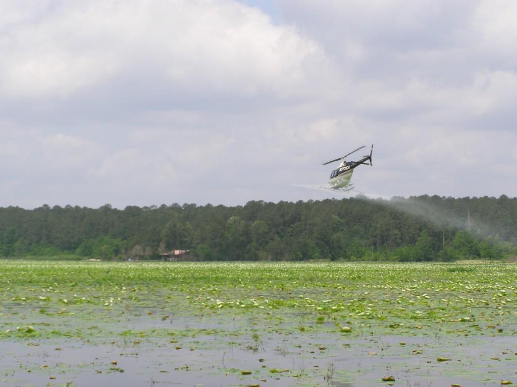 Spraying of Black Cat Lake 2009 009
